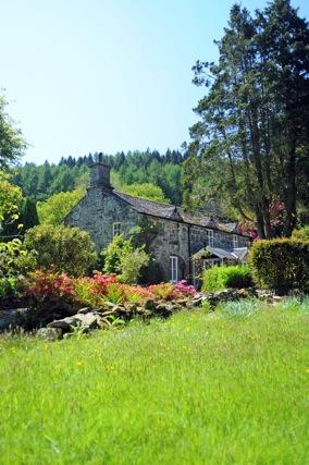 Brynadda garden (32)